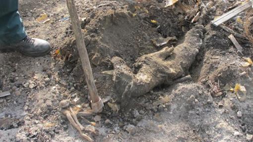 Cadáver de otro galgo encontrado en la finca