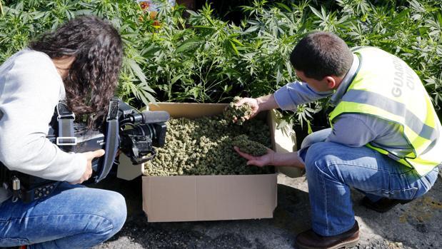 Imagen de archivo de una operación de la Guardia Civil contra el cultivo ilegal de cannabis
