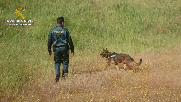 El perro «Amillán» junto con su guardia civil guía