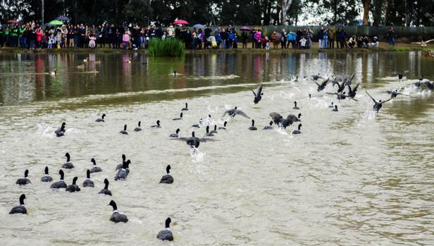 Patos en una de las lagunas de la Cañada de los Pájaros