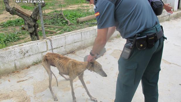 La Guardia Civil trasladó a los perros a una clínica veterinaria
