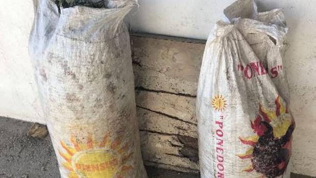 Los sacos de aceitunas incautados por la Policía Local