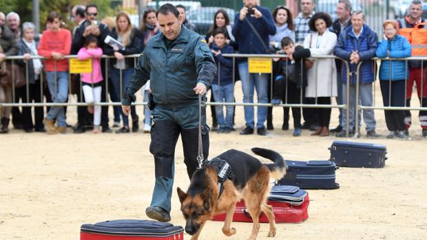 También ha participado en la jornada una perra que ha intervenido tras el reciente terremoto de México
