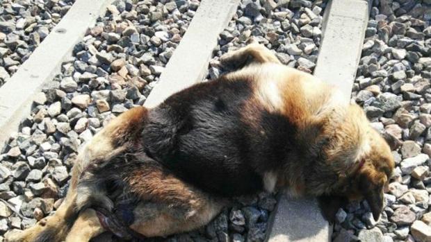 Los perros se encontraban en estado de descomposición
