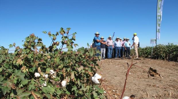 La jornada muestra in situ a agricultores y profesionales agrarios los avances logrados en el cultivo