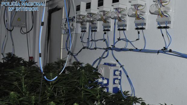 Imagen de la plantación de marihuana en una vivienda de San Juan de Aznalfarache