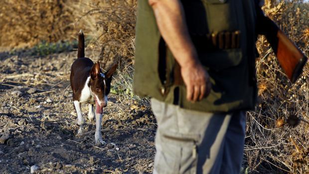 Imagen de archivo de un cazador durante una batida