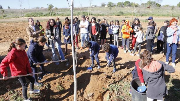 Los estudiantes de Mairena del Aljarafe plantaron ayer los primeros árboles del Parque Central