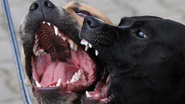 El animal paseaba junto a su propietario y se abalanzó sobre la mujer