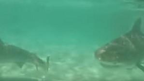El espectacular vídeo de YouTube que demuestra la voracidad de los tiburones