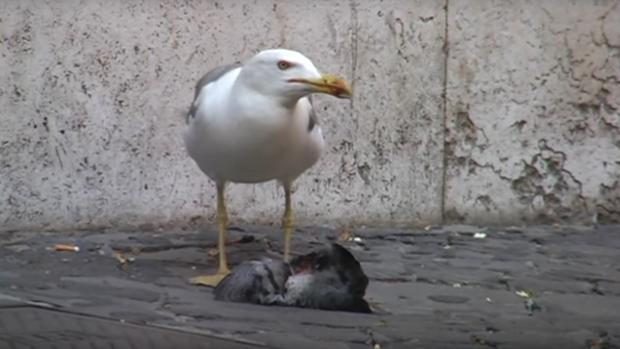 Imagen del vídeo de Youtube