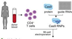 Proceso de edición de genes