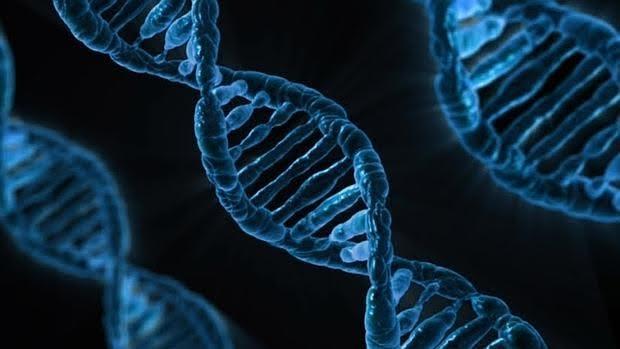 Las mutaciones en BRCA1 provocan que las células no puedan corregir las lesiones en su ADN
