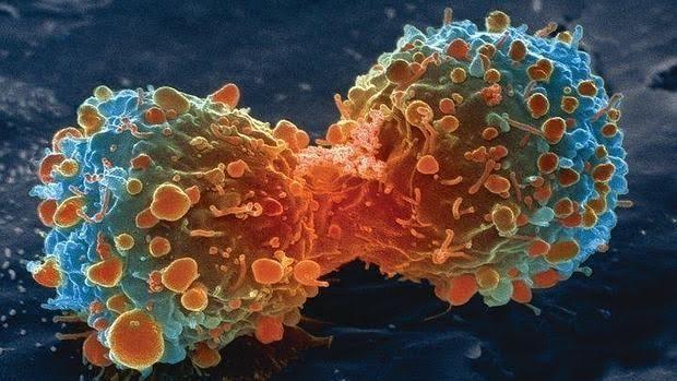 División de una célula de cáncer de pulmón