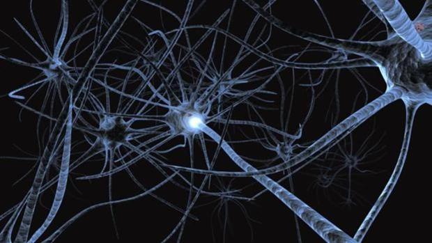 La neurogénesis cerebral no parece deteriorarse con la edad