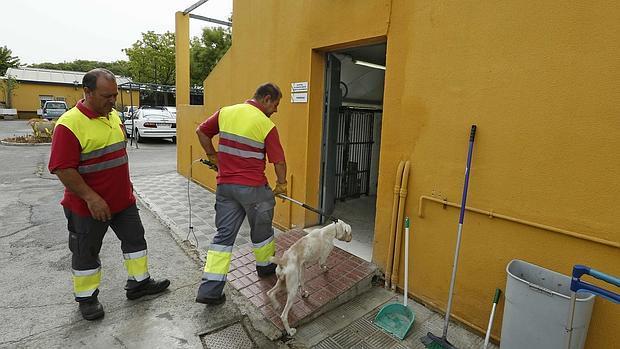 Empleados del zoosanitario de Sevilla en las dependencias municipales