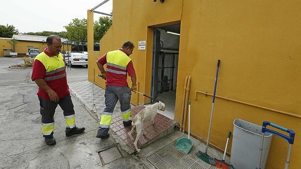 Empleados municipales del Zoosanitario de Sevilla