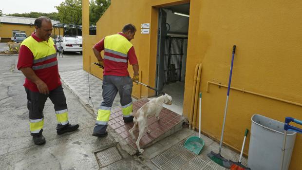 Dos trabajadores del Zoosanitario