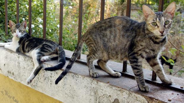 Gatos por las calles de Sevilla