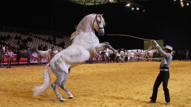 Un caballo en la pista del Sicab