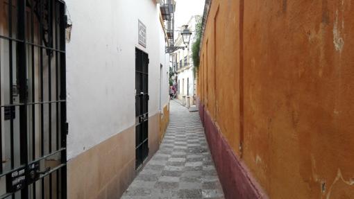 Calle Vida (141 cm)