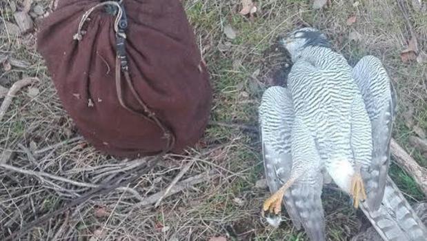 La investigación de la Guardia Civil se inició a raíz de una foto publicada en las redes sociales por el cazador
