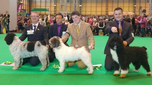 «Paco», un perro sevillano entre los ganadores de la mayor exposición canina del mundo
