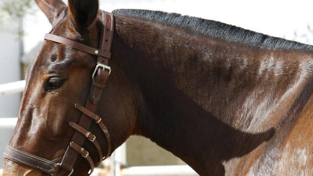 Seis meses de prisión por matar de hambre a un caballo