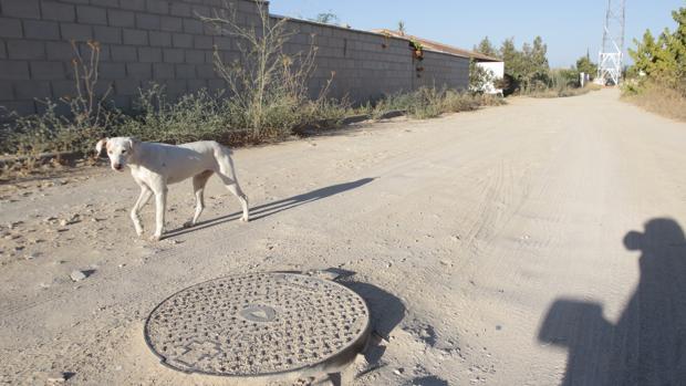Las parcelas pendientes de urbanización en el sector F de Almensilla