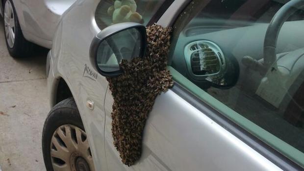Coches, viviendas, colegios y parques afectados por la abejas