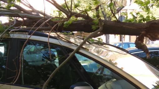 Una rama caída sobre un turismo en la Avenida de Trabajadores Inmigrantes