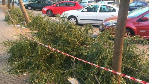 Ramas de árboles caídas delante de una fila de coches estacionados en Avión Cuatro Vientos