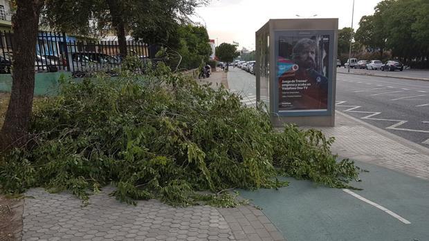 Una rama caída sobre el carril bici en la Avenida de Andalucía
