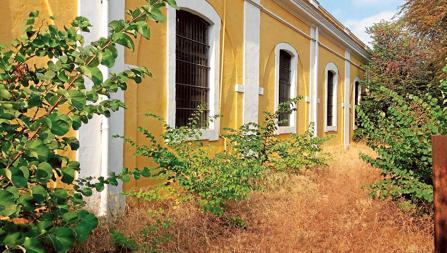 Maleza en una de las fachadas de la Fábrica de Artillería