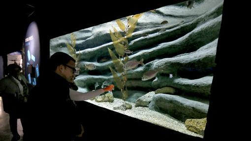 La inversión en el acuario de Sevilla, propiedad de la empresa Aquagestión Sur, asciende a ocho millones de euros