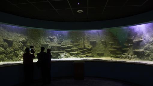 El acuardio de Sevilla tiene más de 7.000 animales de 400 especies