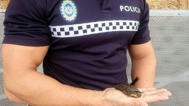 La tortuga rescatada