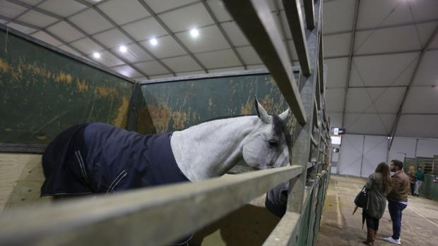 Un caballo de pura raza, en la pasada edición de Sicab