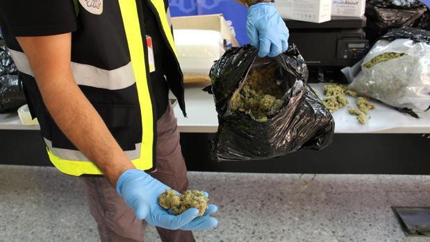 Las plantas ilegales era embalabas con un doble revestimiento con amoniaco para evitar la percepción al olfato
