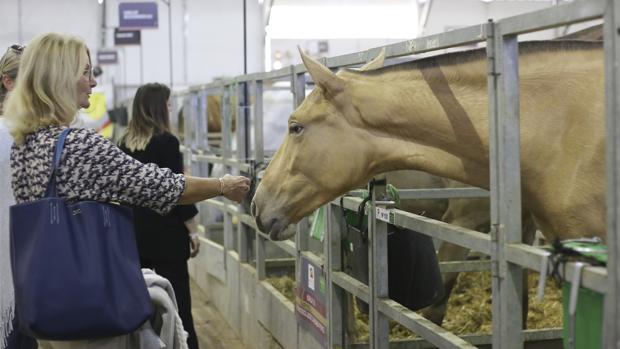 Varias mujeres ayer en la zona de cuadras del Salón Internacional del Caballo de Sevilla