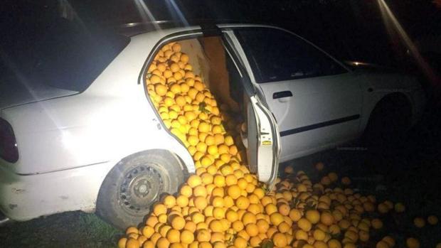 Nueve toneladas de naranjas robadas en Cazalla