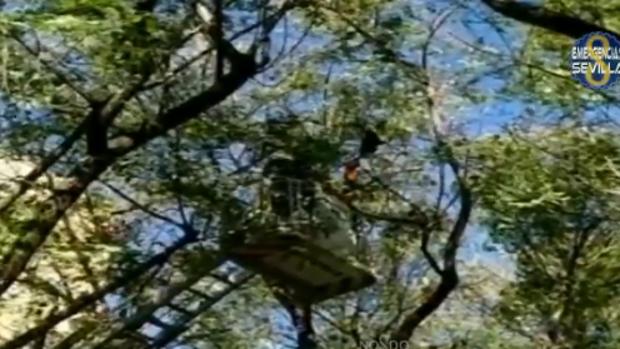 Imagen del halcón atrapado
