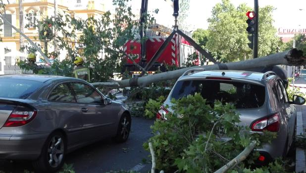 Imagen de la aparatosa caída del árbol en la avenida de la Cruz del Campo