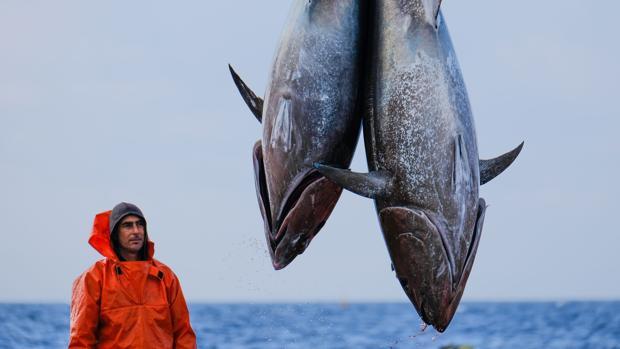 El atún rojo es un producto muy preciado