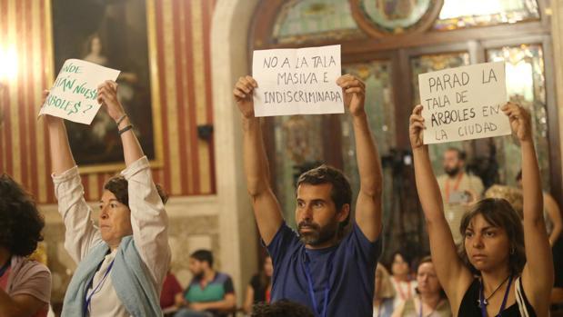 Pancartas en el pleno de Sevilla contra la tala llevada a cabo por la Delegación de Parques y Jardines