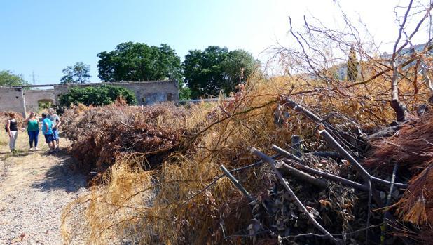 Abandono del Parque Miraflores