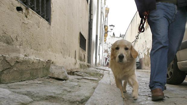 Si cae por el mal estado de la calle y está 45 días escayolado se le indemniza con 5.000 euros
