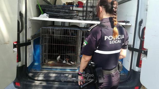 Una agente de la Policía Local con uno de los perros rescatados