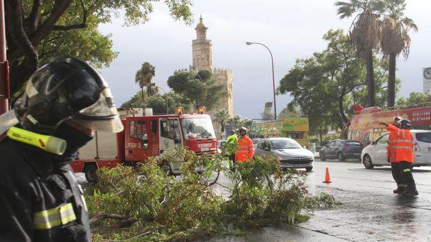 Los servicios municipales actúan en Sevilla por las incidencias del viento, lluvia y frío