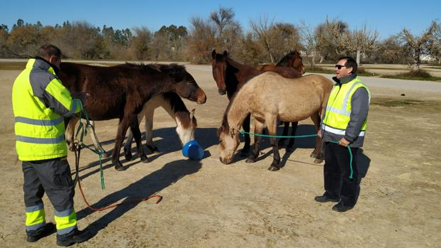 Imagen de los caballos y mulos con los técnicos municipales
